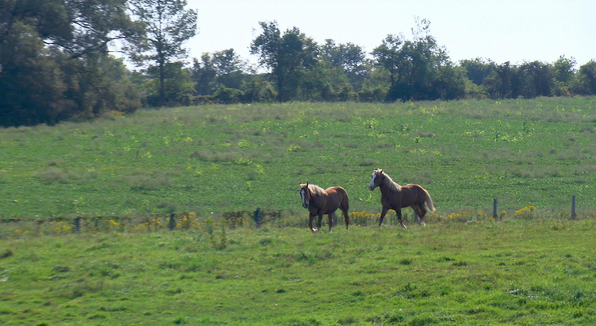 horsesironhorse